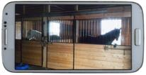 Indoor barn cam, Princess Leia, foaling camera